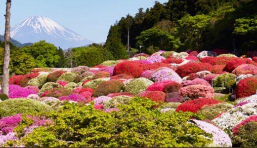 つつじ を見に箱根 山のホテル へ!2018の見頃は?